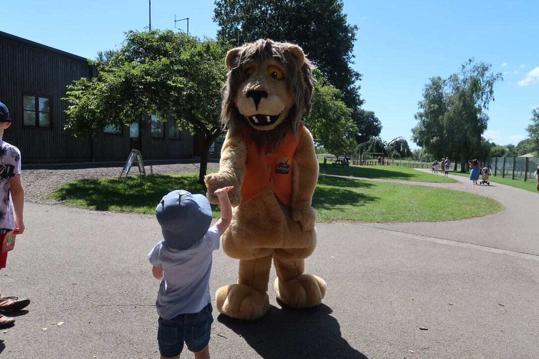 M gives the Africa Alive mascot, Reggie the lion, a high five.