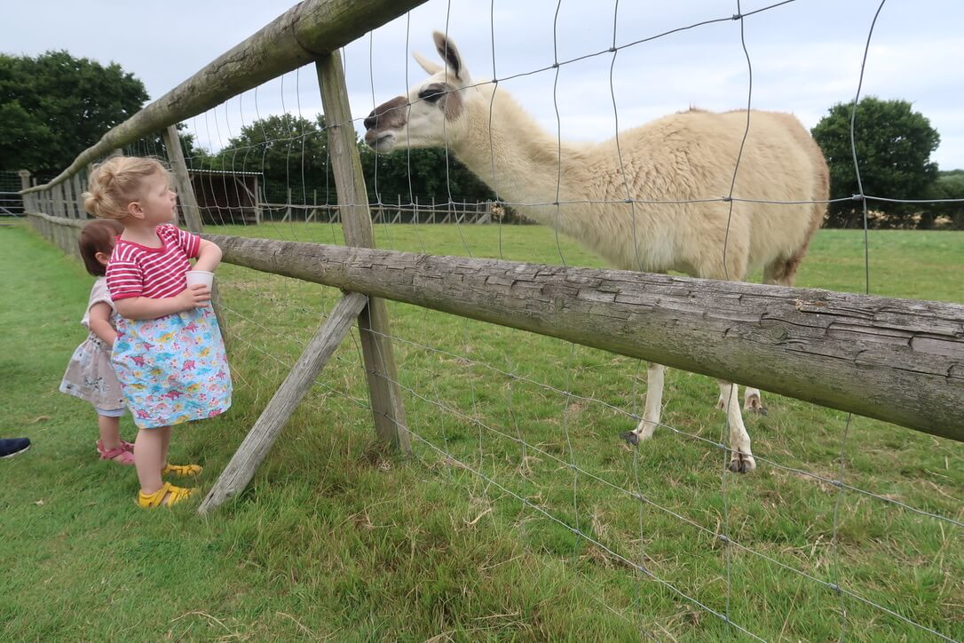 M reaching into a cup of animal feed while a llama looks into her eyes!