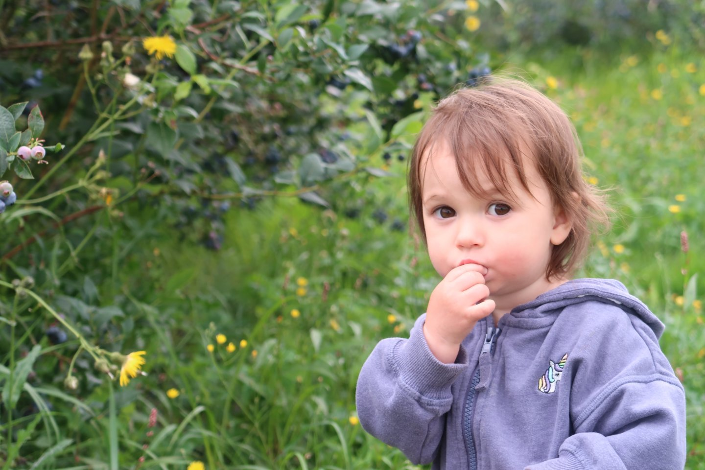 B looking at the camera, with her fingers in her mouth (presumably eating a blueberry!).