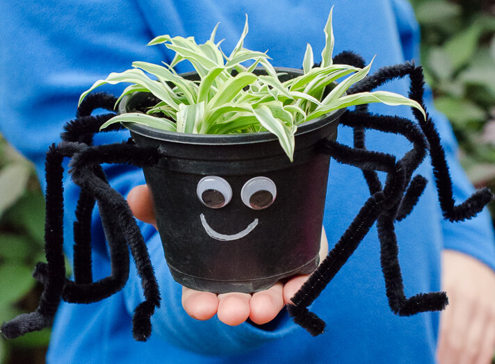 A spider plant sits in a black plant pot decorated with eight black pipe cleaner 'legs' and googly eyes.