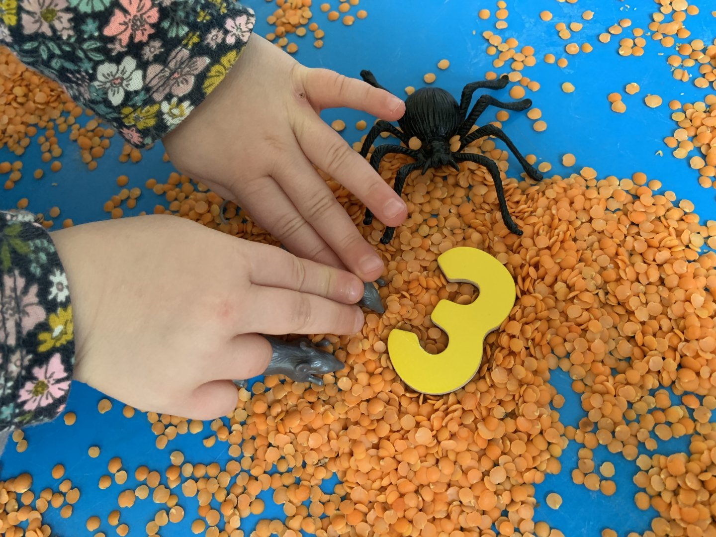 A close out of M's hands arranging two silver plastic mice and a large black plastic spider next to a yellow number three, on a bed of orange split lentils.