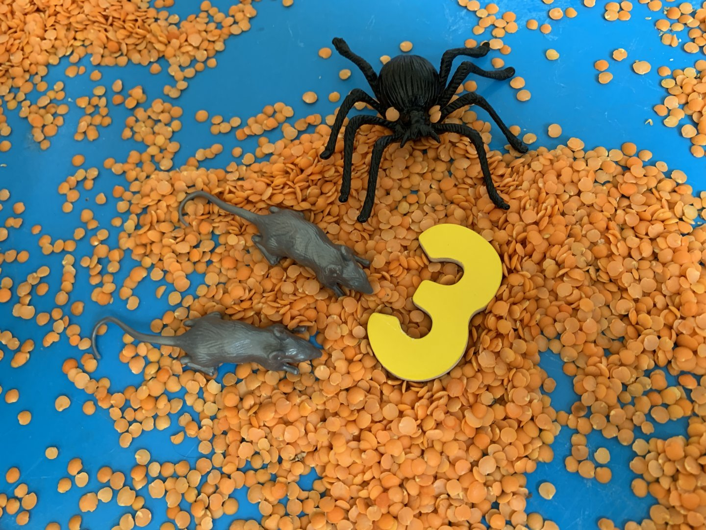 A close up of two silver plastic mice and a large black plastic tarantula next to a yellow number three, on a bed of orange split lentils.