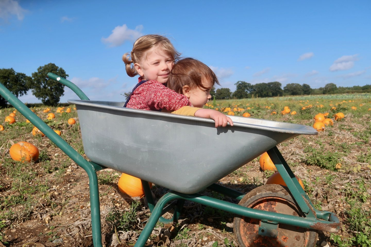 M and B in a wheelbarrow at the pumpkin patch.